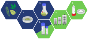 Phyton Biotech Plant Cell Fermentation Process Picture