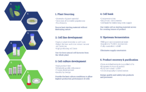 The Plant Cell Fermentation Process Infographic