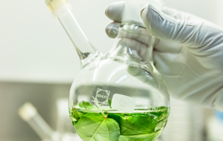Using green chemistry to produce taxol