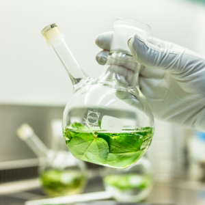 """Phyton Biotech develops and applies sustainable """"Green Technology"""" Docetaxel"""